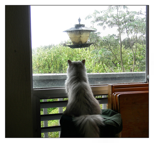 Waiting for the birds