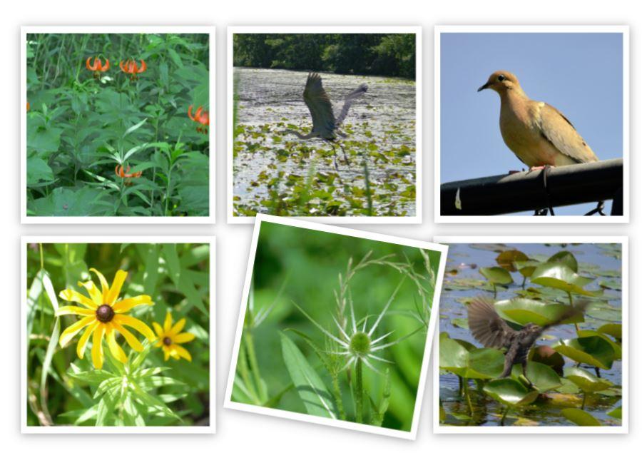 wetland collage